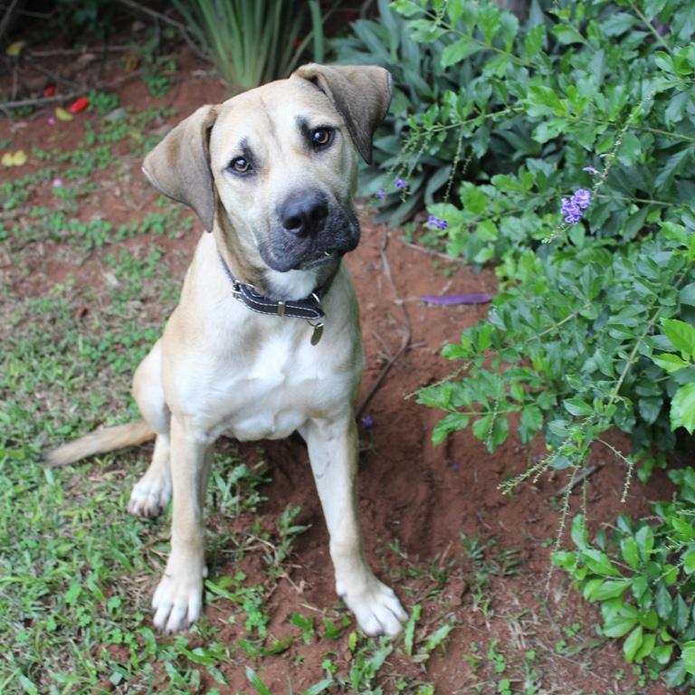 Kiki   Project Dog, Durban, South Africa