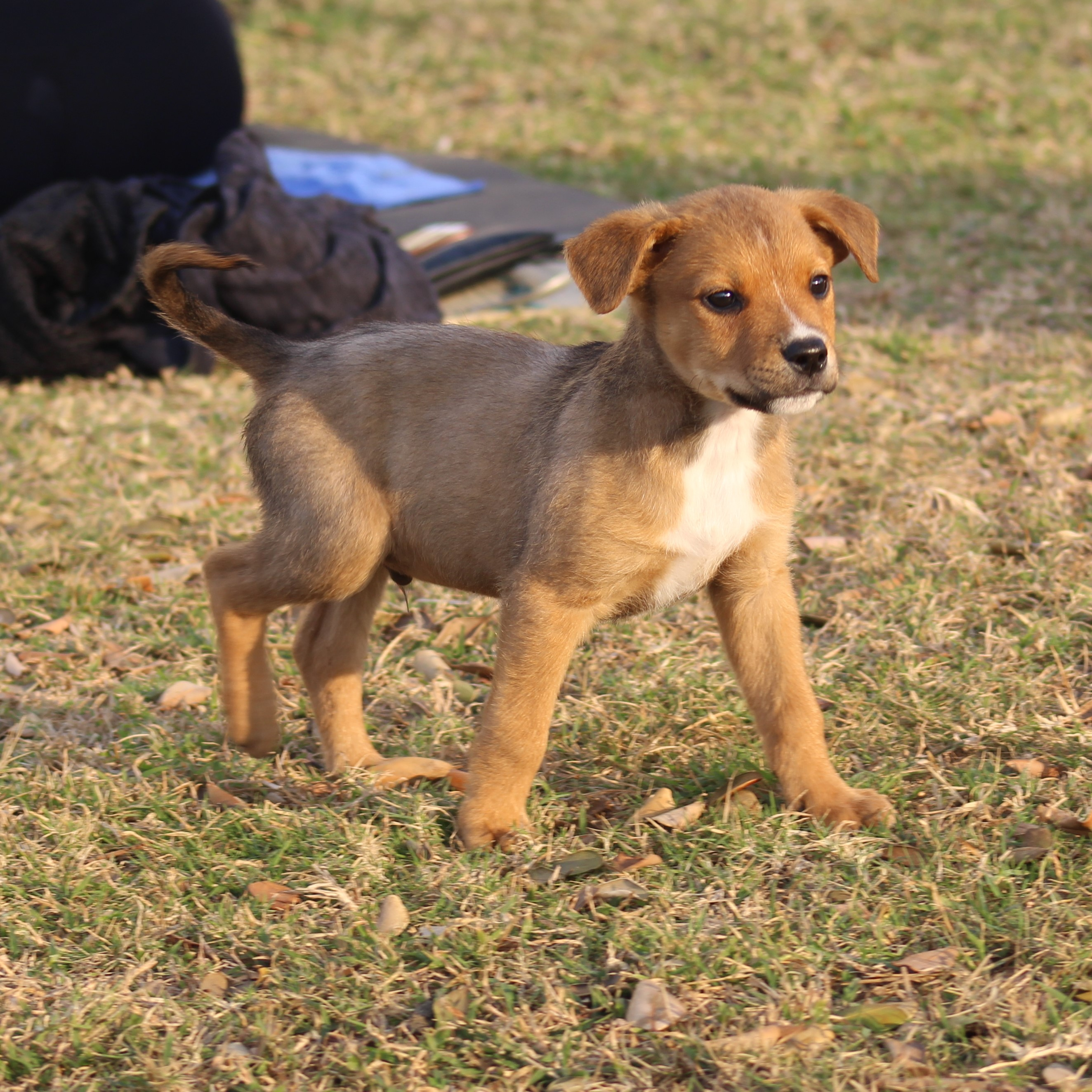 Pups For Adoption | Project Dog, Durban, South Africa